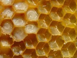 A méhpempő hatása a szervezetre