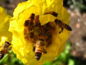 A méhpempő kiszállítás országosan történik
